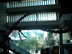 Dinosaurs at MOSI
