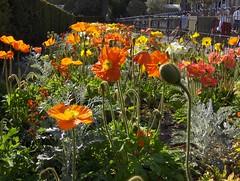 Jardin du Luxembourg (Joe Shlabotnik) Tags: flowers paris france 2007 april2007