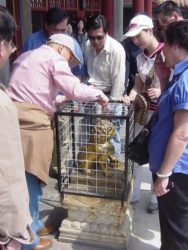 jaula para el león peligroso