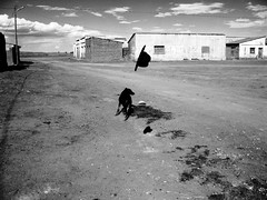 (todoslosantos* Juan Antonio Balsalobre) Tags: world dog chien dogs animal perro perros todoslosantos juanantoniobalsalobre balsalobre juanantoniobalsalobrecarbonmadecom