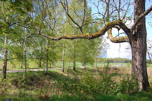 EFIT 2007-05-12. 12:10 - vacker gren utanför loppis Omigen i Skåre