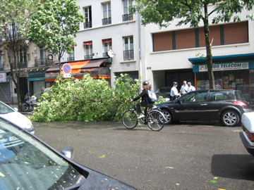 (13-5) fallen tree