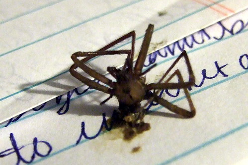 BROWN RECLUSE!