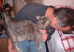 feline behavior
