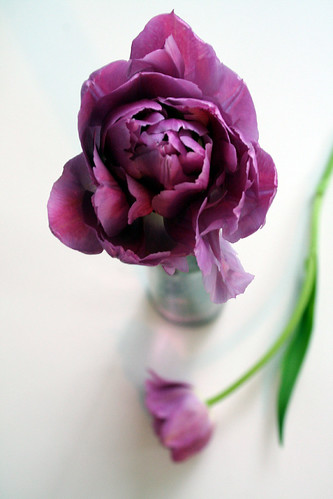 purpletulips5