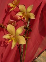 LijuWedd (47) (Ambika J) Tags: wedding church scenery cochin tiruvalla