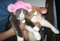 Mitsuru and Carly