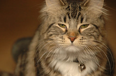 Kitty Ponders Revenge for the Poison Pet Food Scandal (FunResearcher) Tags: lake canada kitty louise schredd funresearcher