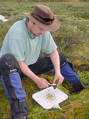 Martin collecting diatoms