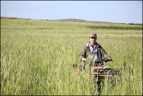 the farmer, coming through the rye