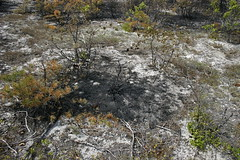 The randomness of fire (matt the botanist) Tags: newjersey pinebarrens wildfire badluck