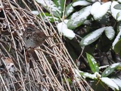 Snowbirds-3928