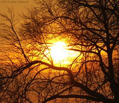 Tervuren.Belgium (Natali Antonovich) Tags: sun nature tree silhouette tervuren belgium belgique belgie winter christmas christmasholidays parallels
