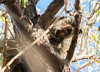 Porcupine Whisperer (cuddleupcrafts) Tags: porcupine whisperer animal wildlife antelope island state park utah