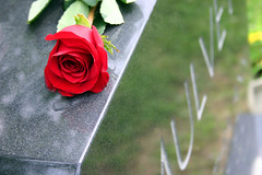 Ten Years Ago Today (Weave) Tags: cindy grave rose death memorial mourning headstone canondigitalrebel grab grief tombe ericweaver peine leid movingon dpression pleurant tiefstand tgragamduitmomhirnnbn beklagend