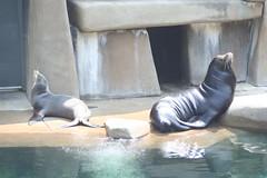 zoo 043 (chippa) Tags: digital canon rebel xt zoo penguin meghan lorikeet seal seals louisville s400 cougar canonrebelxt lorikeets canons400 louisvillezoo