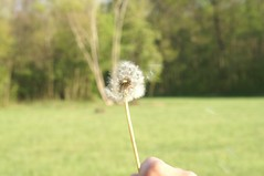 Blowing in the wind (2) (freezeimage) Tags: action blowball laxenburg