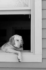 Window nap (dwiggs) Tags: beths wowiekazowie