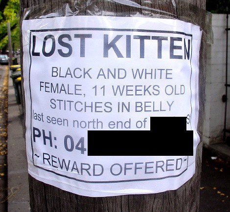 Lost kitten sign