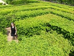 Labyrinth (Joe Shlabotnik) Tags: france gardens hedge maze sue labyrinth villandry 2007 april2007 justsue