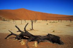 Deadvlei - Namib Desert - Namibia (ladigue_99) Tags: africa landscape sand desert geology deserto sabbia geologia namibian sossusvlei namib deadvlei supershot flickrsbest abigfave anawesomeshot colorphotoaward impressedbeauty ladigue99