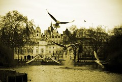 Gulls in St. James's park (Miodrag Bogdanovic mitja) Tags: park lake london water westminster birds st flight guards jamess mitja hourse miodrag guls bogdanovic flickrdiamond worldthroughlens worldthroughlenscom