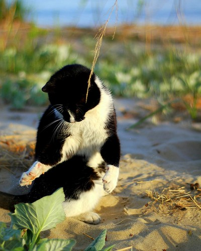 Kitty Plays At The Beach :)