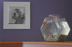 shadow and goldfish (pamelakliment) Tags: shadows goldfishbowl photographyshow kliment thebusstop pamelakliment