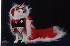 Mr/Miss Cat Universe