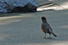 d80-bird