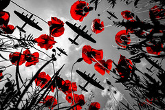 POP0009 (Smart Aviation Art) Tags: poppy poppies poppyfield poppyfields lancaster vulcan avro spitfire hurricane aircraft military bbmf