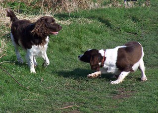 Benjy and Bailey