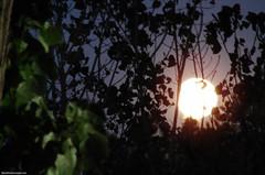 Zie de maan schijnt door de bomen