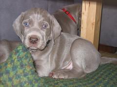 Puppy 05/04/07