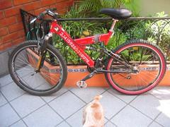 PI Bike - New wheel