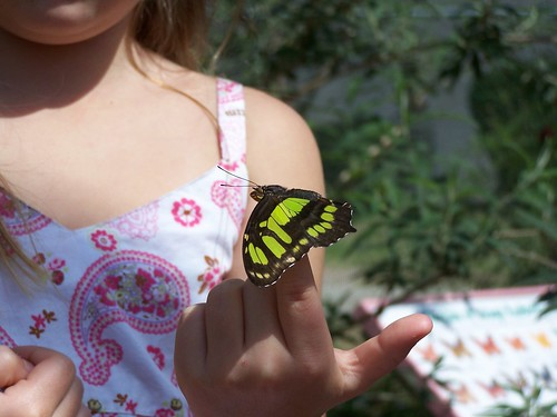 Giant Swallowtail (?) on little girl's finger