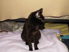 PICT0181 (azmarine) Tags: animals kitties 2007