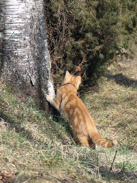 checking what's behind the tree