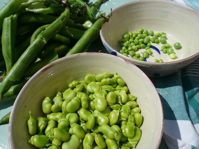 peas and broad beans.JPG