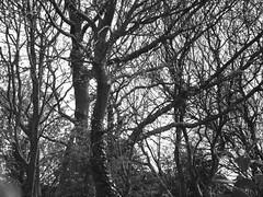 Woods (Deathwaves) Tags: woods rhyl finest natures naturesfinest