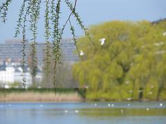 En dag ved søerne (andy.panty) Tags: forår søerne fulge