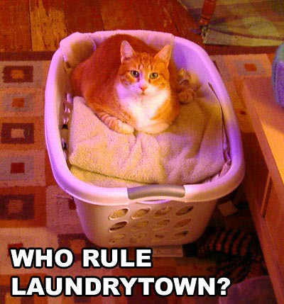 who rule laundrytown?