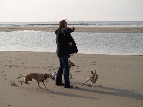 Vlieland April 2007 with Whippets
