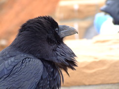 Nevermore that look - by sbisson