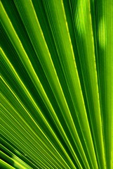 jungle abstract (Darwin Bell) Tags: abstract green palm eyeofthebeholder naturesfinest supershot mywinners supershots 30faves30comments300views colorphotoaward superaplus aplusphoto irresistiblebeauty magicofcolor og4 goldenphotographer top20green citrit focuslegacy abstractartaward