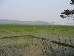 IMG_0155 (Panoptikum) Tags: xishuangbanna 西双版纳