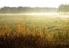 IMG_3616 (Eili) Tags: autumn light mist field tag3 taggedout rural finland countryside tag2 tag1 siikajoki