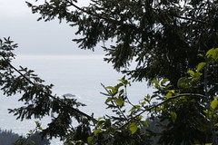 Pacific Ocean Through Redwoods