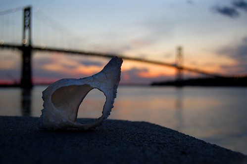 Shell and Bridge