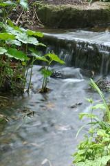 Wasser im Park (u.v.poblotzki) Tags: park wasser volksgarten langebelichtung